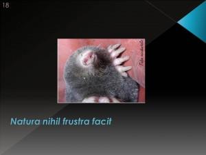 Se a natureza conferiu órgãos de maneira tão parcimoniosa, por que a toupeira, que vive no escuro, tem olhos?