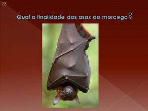 Para que servem as asas dos morcegos? Para agasalhá-los?